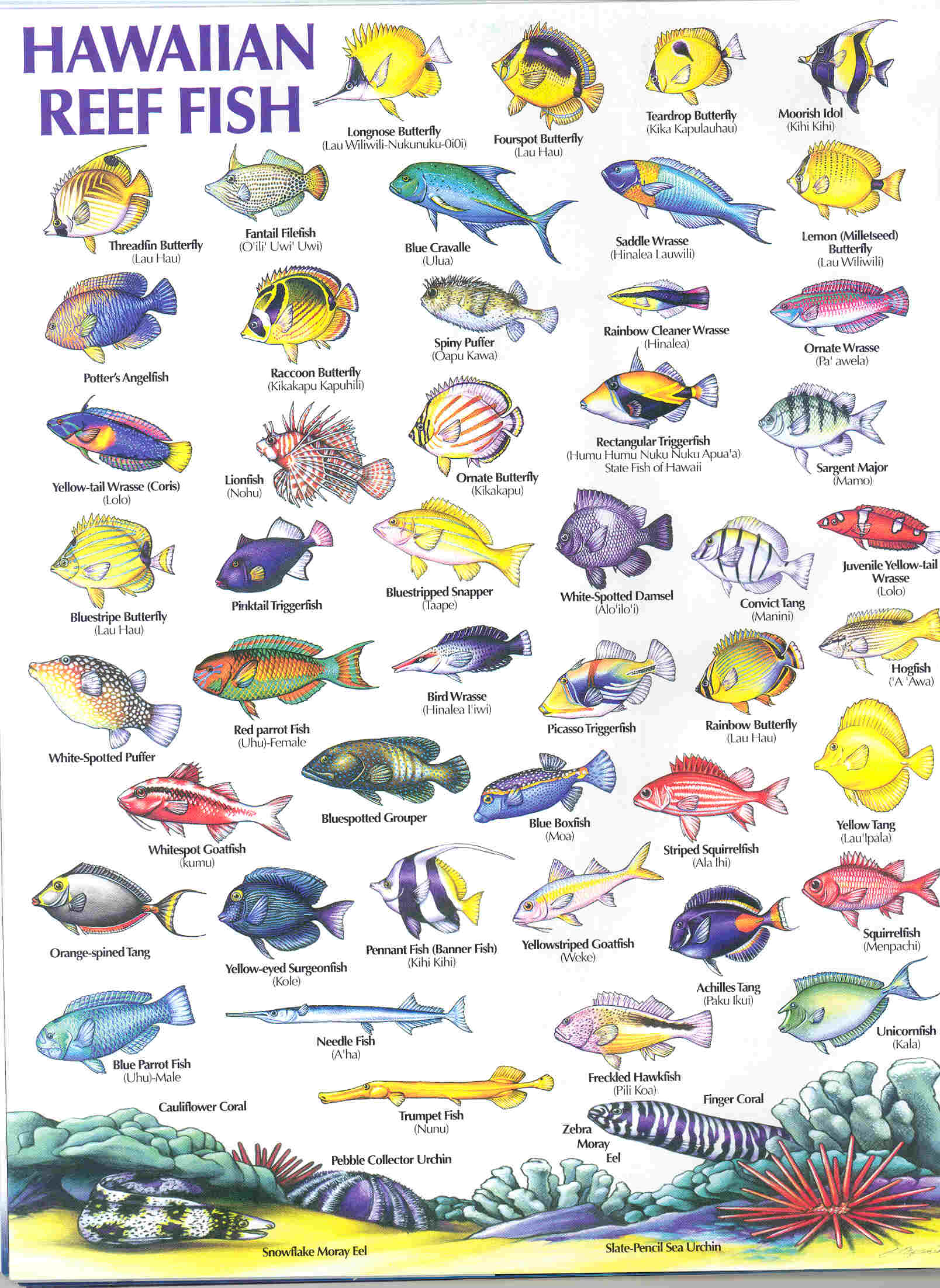 HAWAIIAN REEF FISH GUIDE - Types of fish, Hawaiian names